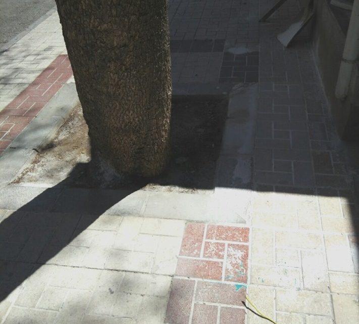 Reposición y reconstrucción alcorques afectados por raíces e pavimento Calle Alcalde Nicolás Maroto
