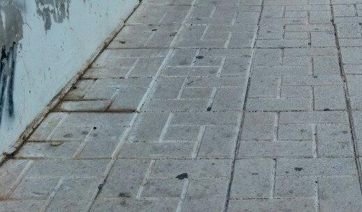 Desbroce de crecimiento de la vegetación de forma salvaje e incontrolada sobre la acera calle Llobregat