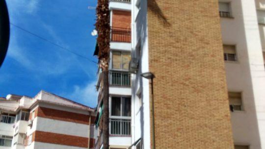 Actuación de poda reducción de volumen Alcalde Joaquín Quiles solicitado por Asociación de Vecinos Pablo Picasso Jardìn de Màlaga
