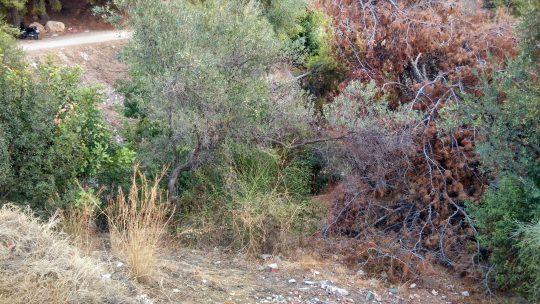 Retirada de basura y adecuación del arroyo urbano Quintana,solicitado por Asociación de Vecinos Pablo Picasso Jardín de Málaga