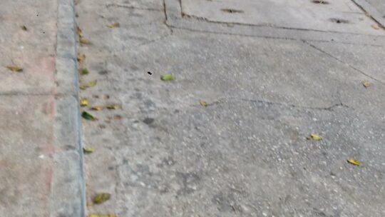 Solicitado baldeo proyectar agua a presión contra los residuos depositados e incrustados sobre la superficie viaria calzada y acerado con objeto de arrancarlos y arrastrarlos hasta el imbornal de alcantarillado más próximoen CALLE CRISTÓBAL DE FONSECA, N.° 16